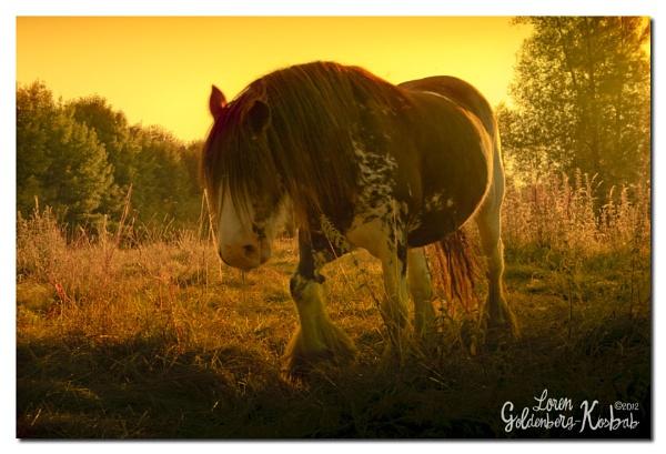 Golden SunLight by Leilani