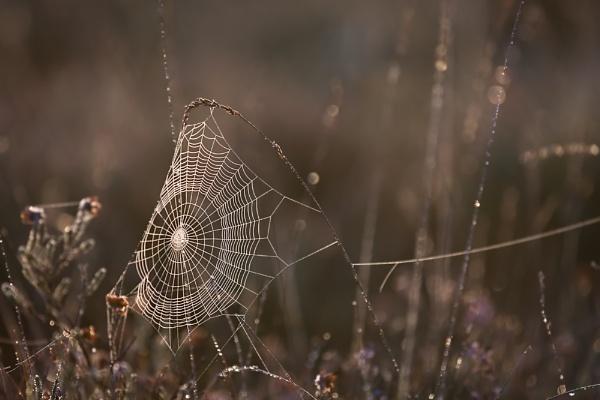 Morning Silk by Paintman