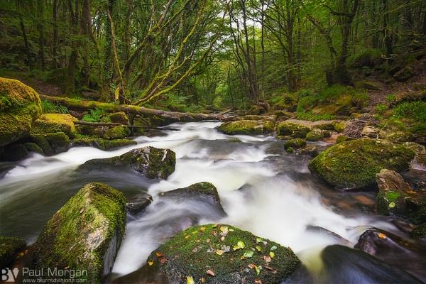 Downstream by pmorgan