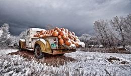 Cold Pumpkins