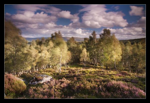 Birlin' Birch