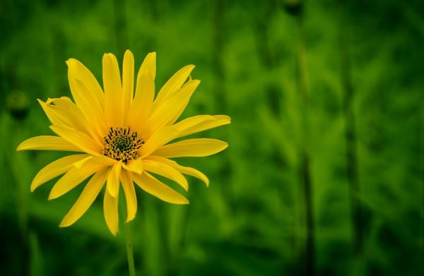 flower by seeky007