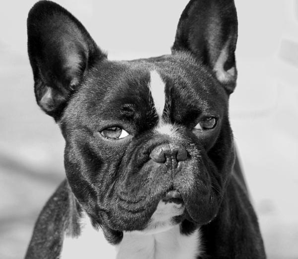 my dog by toniiixx