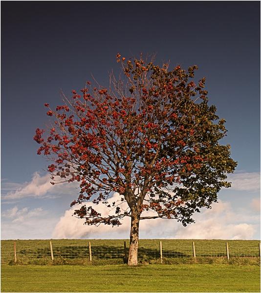 Autumn or Summer by Irishkate