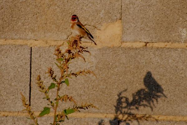 Me & my shadow... by Chinga