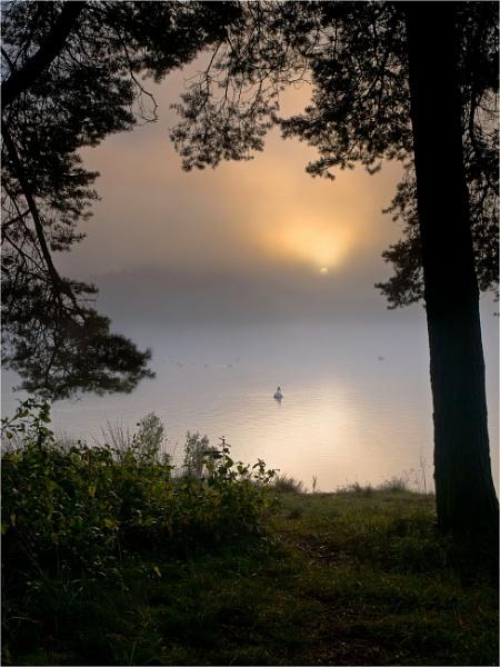 Misty Morning by bill33