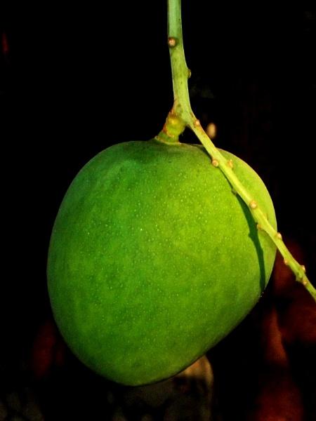Manggoes 3 by arhab