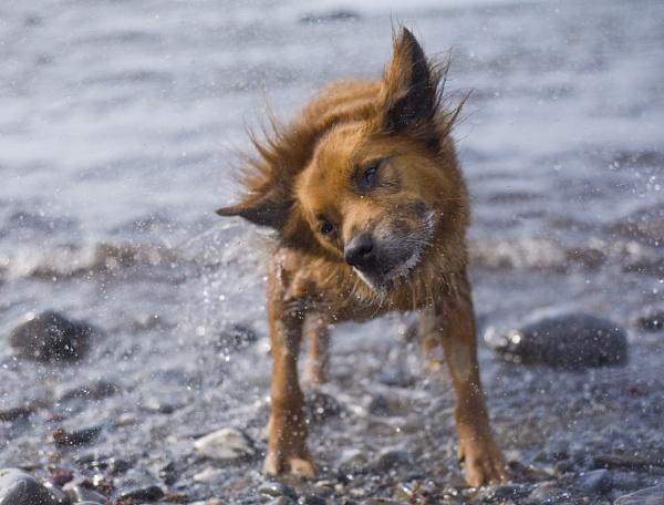 Sea Dog by foxdownspringflower
