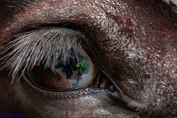 THE BLUE EYED HORSE by sirhcelah100