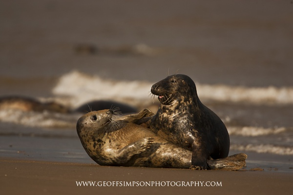 Seal love by AndalucianPhotoAdventures