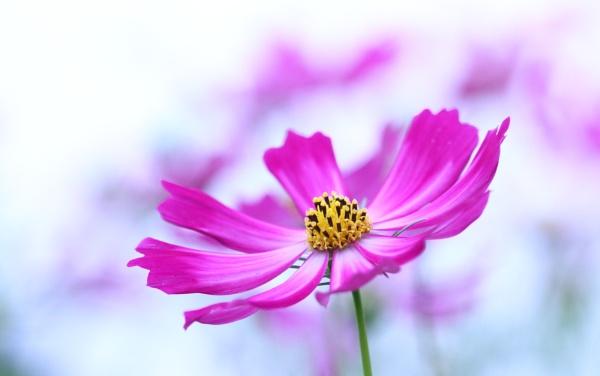 Autumn Flower by arbor