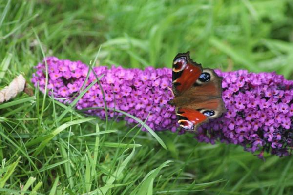 A garden visitor by loobylyn