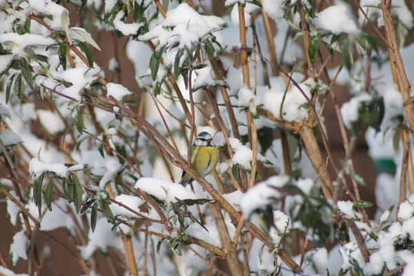 pretty in snow by loobylyn