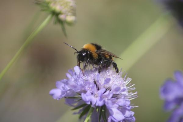 buzzing around by loobylyn