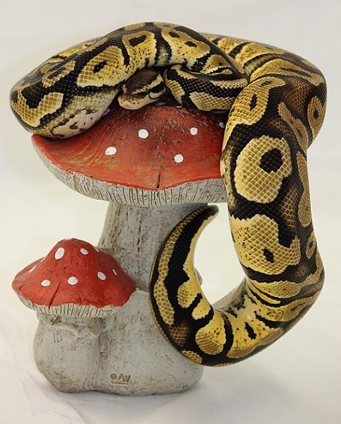 Royal Python by firzhugh