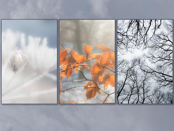 d\'hiver by Pamella