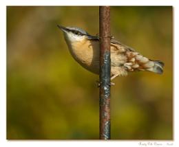 Rusty Pole-Dancer