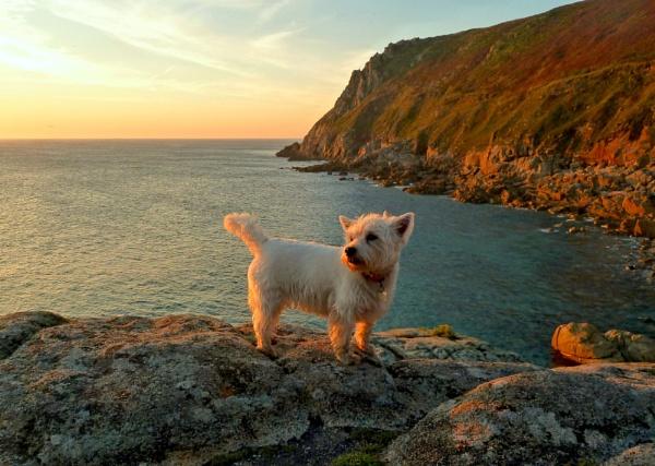 Maisie by Dors-pics