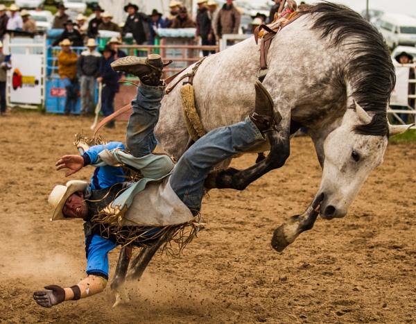 Rodeo XI by steve_evans