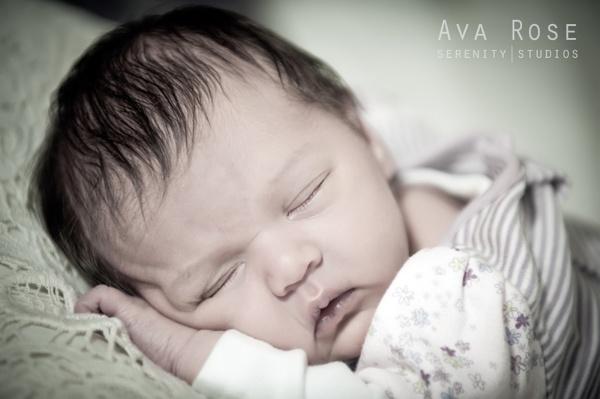 Ava Rose by dannyrich