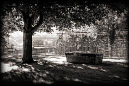 In eternal shade