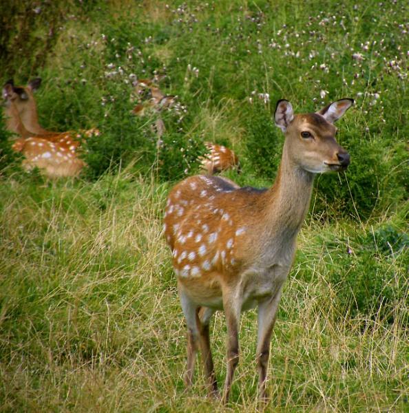 Not Too Deer by Fefe