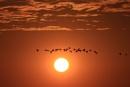 Stragglers in the Setting Sun