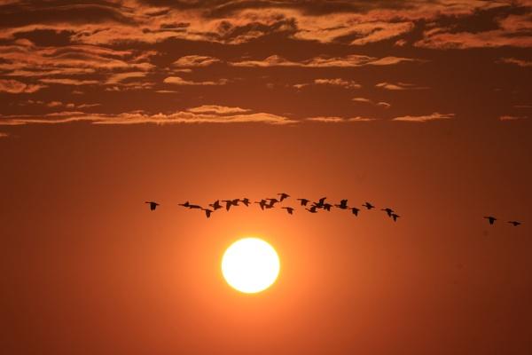 Stragglers in the Setting Sun by fandangofandingo