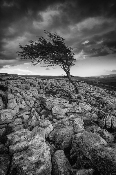 Lone tree by clive burrow