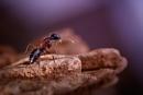 Desert Ant by Flykt