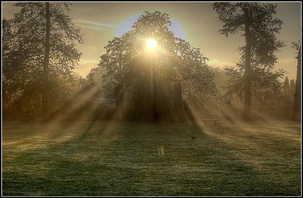 Sunbeams. by PEELO