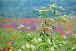 Wild Flowers Bulgaria