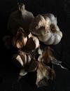 Garlic - natural by cattyal