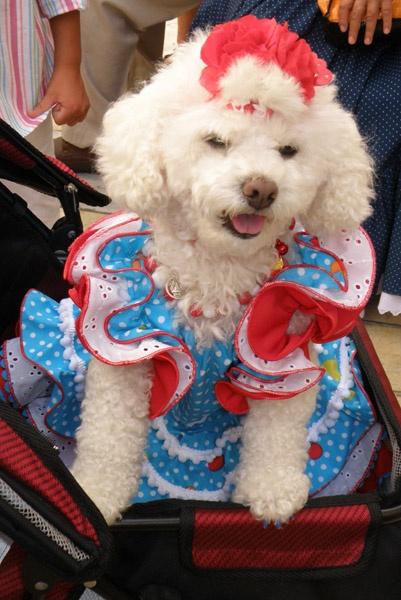 Cute Doggie ! by cameraboy