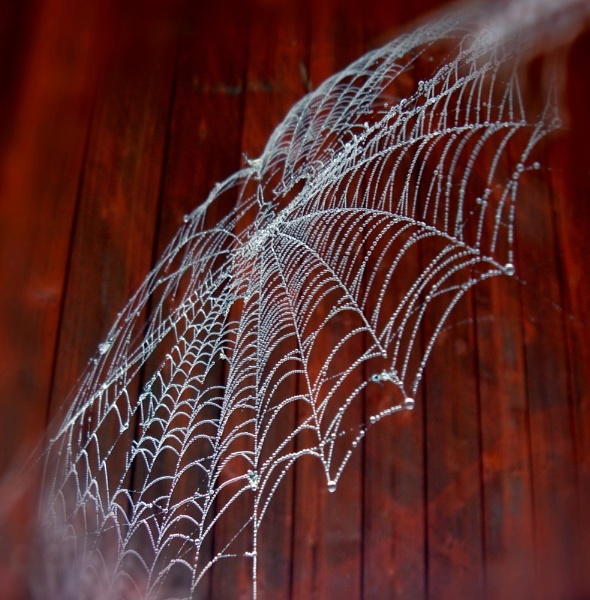 The Web by hughsey