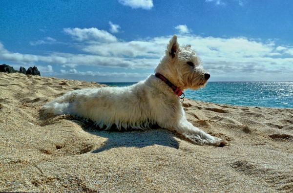 Beach Babe by Dors-pics