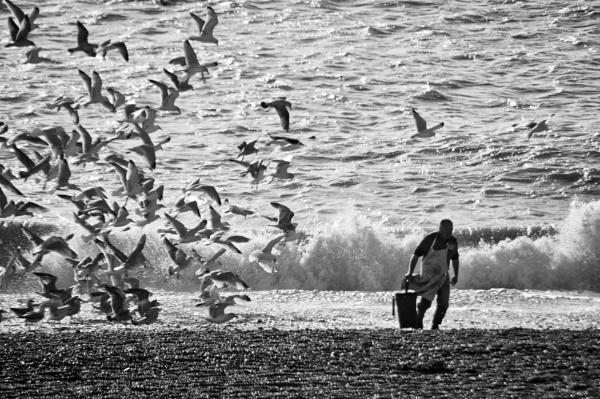 The birds by zippy123
