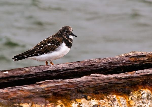 Bird on Rust by jasonrwl