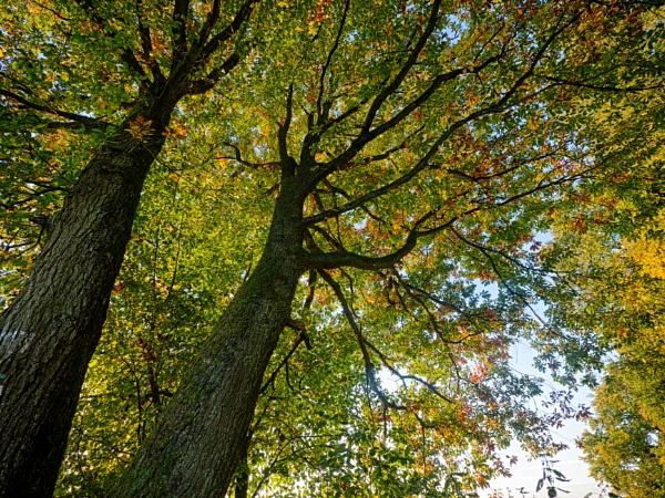 Autumn begins by mlseawell