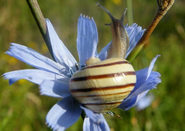 snail by Gid