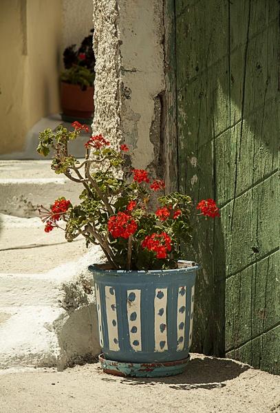 Geraniums in Blue Pot by Irishkate