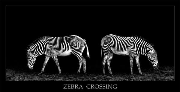 Zebra Crossing by Steinmachine