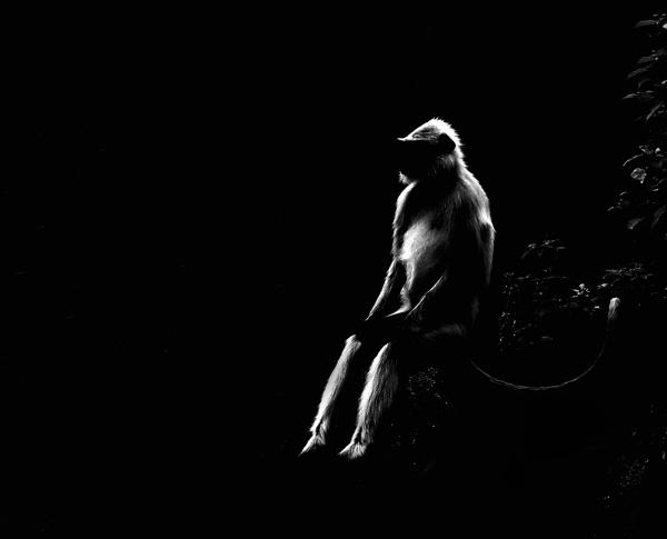 Man or Monkey by bhavya