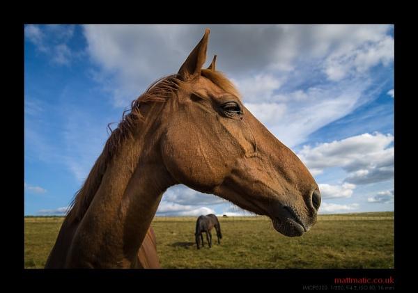 horse•eee by mattmatic
