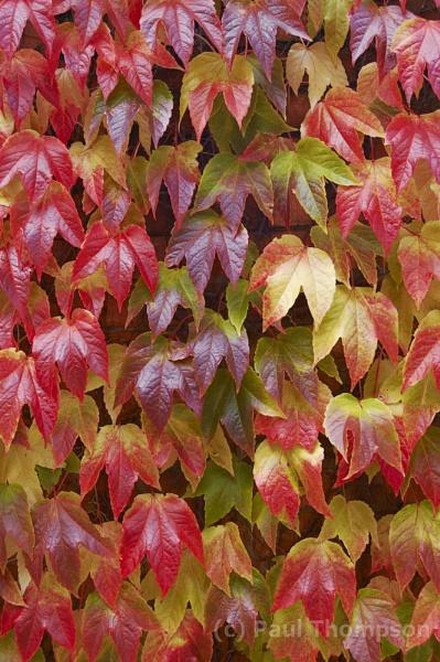 Autumn clours