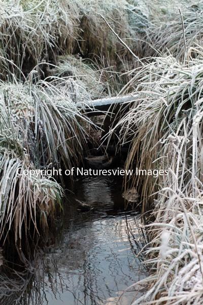 Ogden Stream by Naturesview