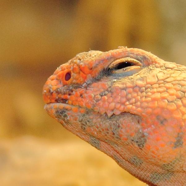 Lizards Head by SH87