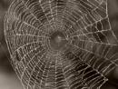 Kifeszítette a pók a hálóját