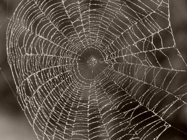 Kifeszítette a pók a hálóját by wacrizphoto