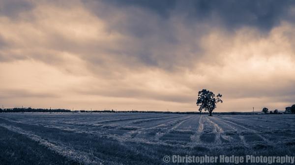 I am Tree by chodge987